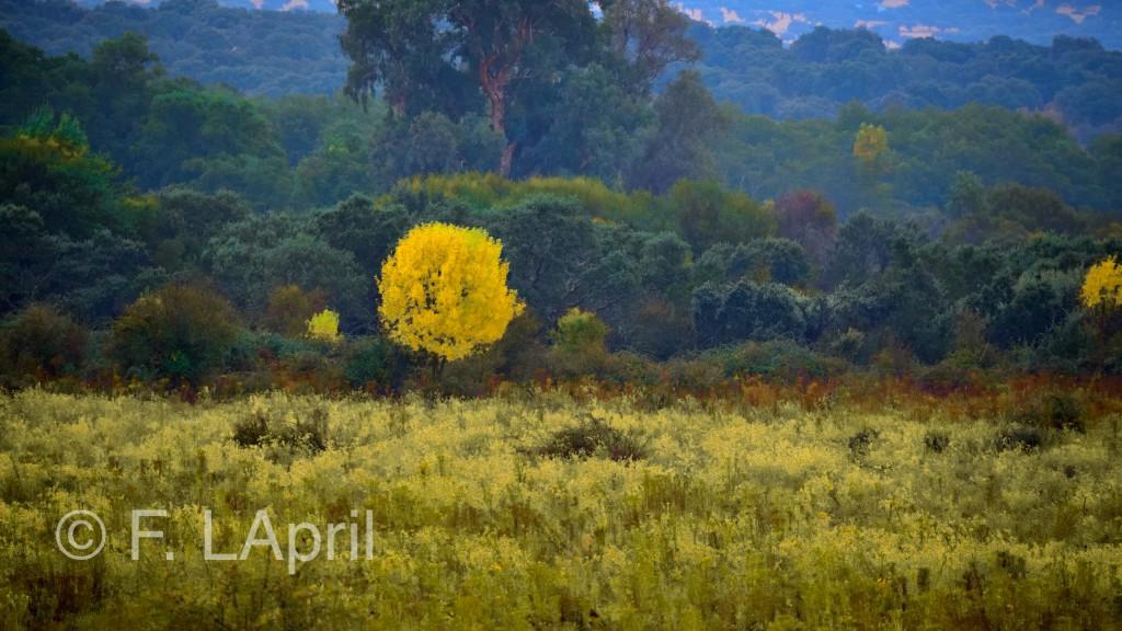 Paisaje otoñal - Autumn landscape